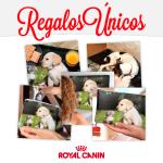 regalos personalizados royal canin